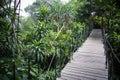 Indonesian jungle Royalty Free Stock Photo