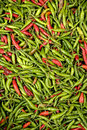 Indonesian red and green chillies background Royalty Free Stock Image
