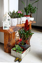 Indoor Botanic Garden For Room...