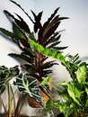 Indoor plants urban jungle Royalty Free Stock Photo