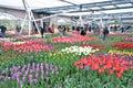 Indoor tulips exhibition at Keukenhof garden, Netherlands Royalty Free Stock Photo