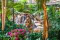 Indoor waterfall feature with garden Stock Photo