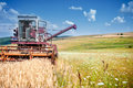 Industrial harvesting process with a specialized combine harvest crops of wheat and grain Stock Photos