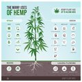 Industrial hemp uses and products Royalty Free Stock Photo