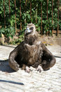 Infant eagle sitting on the ground Stock Photography