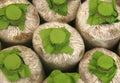 Infected mushroom bag at farm Royalty Free Stock Image