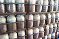 Infected mushroom bag at farm thailand Royalty Free Stock Photography