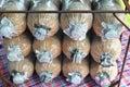 Infected mushroom bag at farm thailand Royalty Free Stock Photo