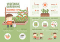 Infographic how to grow vegetable beginner tips