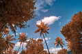 Infra red image of foliage against a blue sky with clouds Royalty Free Stock Photo