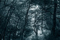 Infrared dense woods backlit forest from national park of peneda geres north of portugal used filter toned blue Royalty Free Stock Image