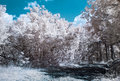 Infrared ir photography landscape with forest road Royalty Free Stock Image