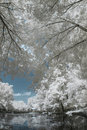 Infrared landscape and details beautiful colors Stock Photos