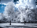 Infrared landscape with white trees and water beautiful Royalty Free Stock Photos