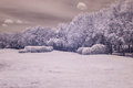 Infrared photo trees and grass in public park bangkok thailan Royalty Free Stock Photo