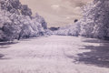 Infrared photo trees and grass in public park bangkok thailan Royalty Free Stock Image