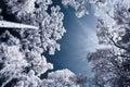 Infrared photo trees sky looking upward Royalty Free Stock Photography