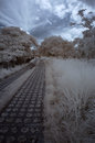 Infrared winter country park in Stock Photography