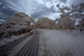 Infrared winter country park in Stock Images