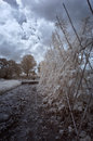 Infrared winter garden country park in Royalty Free Stock Image