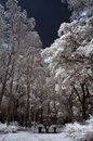 Infrared winter garden country park in Stock Photo