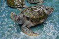Injure turtles injured were treated at aquarium Royalty Free Stock Photo