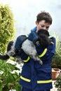 Injured dog Royalty Free Stock Photo