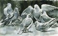 Ink doves washed on paper painting Stock Photos