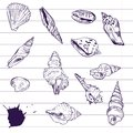 Ink drawing of shells vector illustration Stock Photography