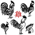 Ink hand drawn vector Rooster. Chinese brush painting. Chinese Translation: Rooster.