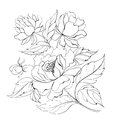 Ink painting peony isolated white vector illustration Royalty Free Stock Photo