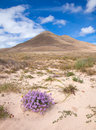 Inland northern fuerteventura around lajares Royalty Free Stock Photo