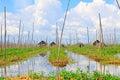 Inle Lake Floating Farm, Myanmar