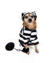 Inmate dog Royalty Free Stock Photos