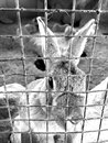 Innocent captive a rabbit kept at a resport in bangalore such a cute and animal who deserves freedom shouldn t be kept in a cage Stock Image