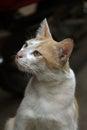 Innocent cat beautiful closeup shot of face Stock Photo