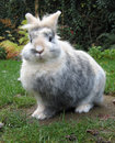 Innocent rabbit Royalty Free Stock Image