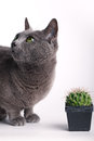 Inquisitive cat inspecting a spiny cactus Royalty Free Stock Image