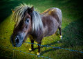 Inquisitve horse in the evening Stock Photos