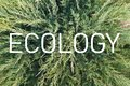 stock image of  Inscription `Ecology` on the background of a living green plant