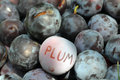 Inscription plum plums with an in english Royalty Free Stock Image