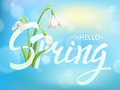 Inscription Spring Time on background with Lettering and snowdrop. Vector Illustration EPS10 Royalty Free Stock Photo