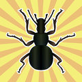 Insect anatomy sticker ground beetle bug carabidae coleoptera sketch of ground beetle ground beetle design for coloring book hand Royalty Free Stock Images
