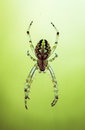 Insect closeup spider Royalty Free Stock Photo