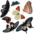 Insect collection of butterflies isolated on white background Stock Images