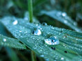 Insect in dewdrop trapped a on a plant leaf Royalty Free Stock Photos