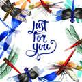Insect dragonfly frame in a watercolor style isolated.