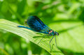 Insect dragonfly on leaf macro Stock Photography