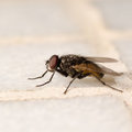 Insect fly Stock Photos