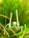 Insect in the green grass beautiful composition Royalty Free Stock Photos